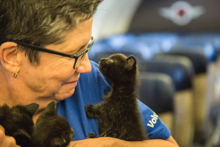 avion Southwest Airlines lleno gatos rescatados huracan harvey
