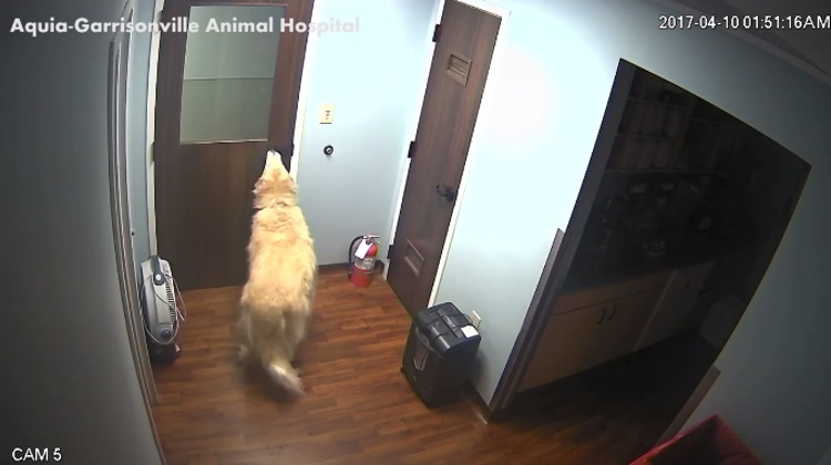 video perro escapa clinica veterinaria