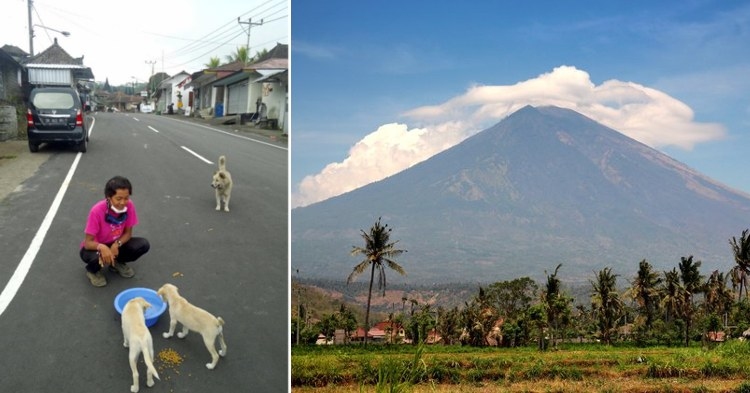 animales volcan bali indonesia