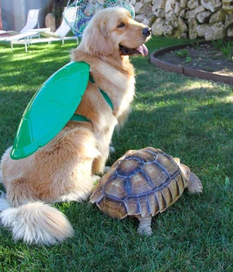 tortuga larry amiga perro golden retriever cricket