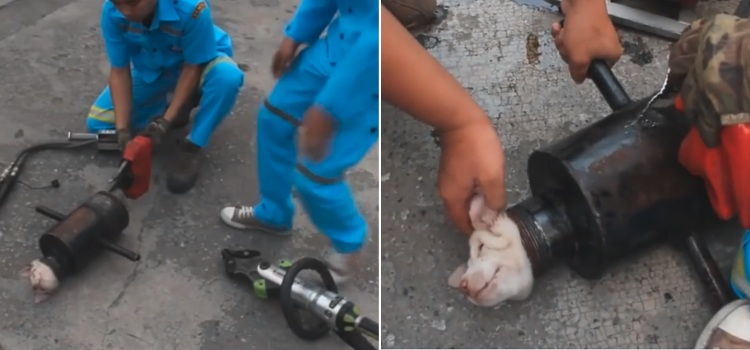 video rescate cachorro atrapado tubo hierro