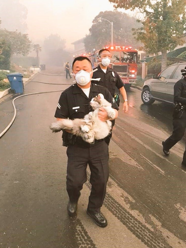 foto policia salva gato incendios los angeles