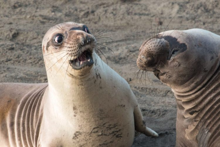 fotos ganadoras Comedy Wildlife Photography 2017