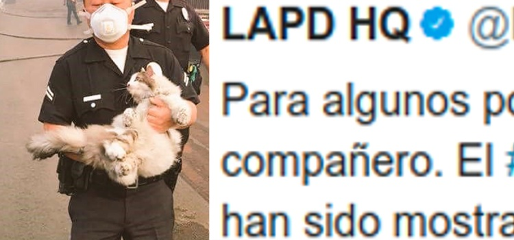 policia salva gato incendios los angeles