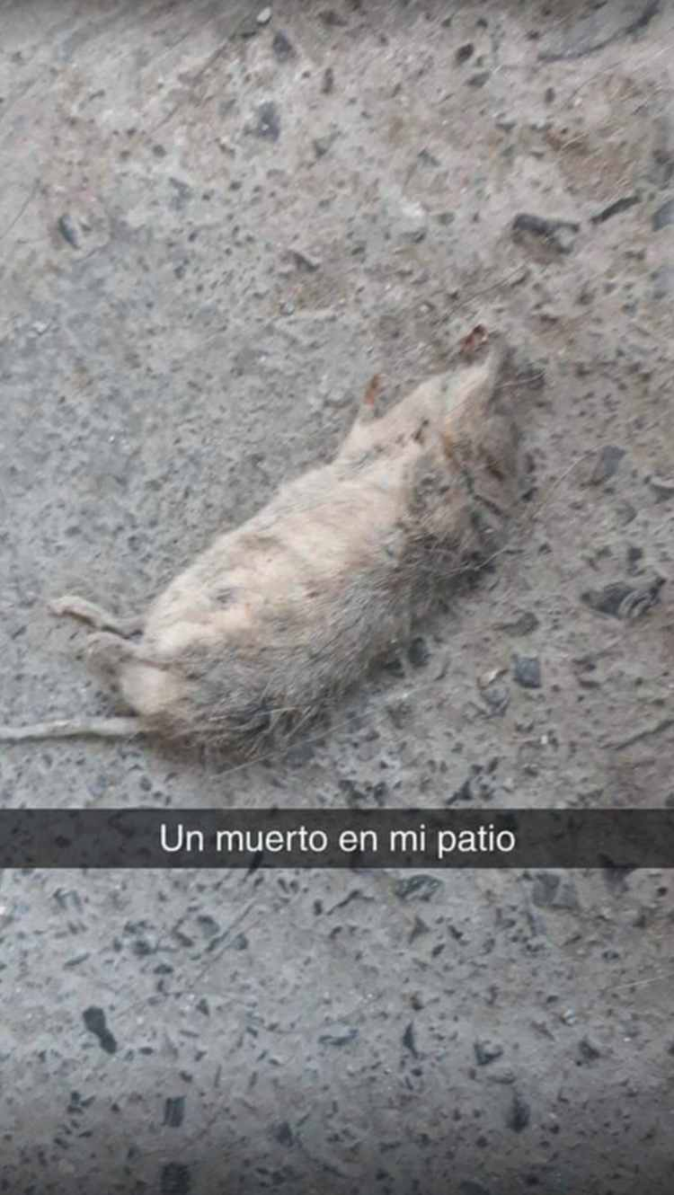 rata muerta patio