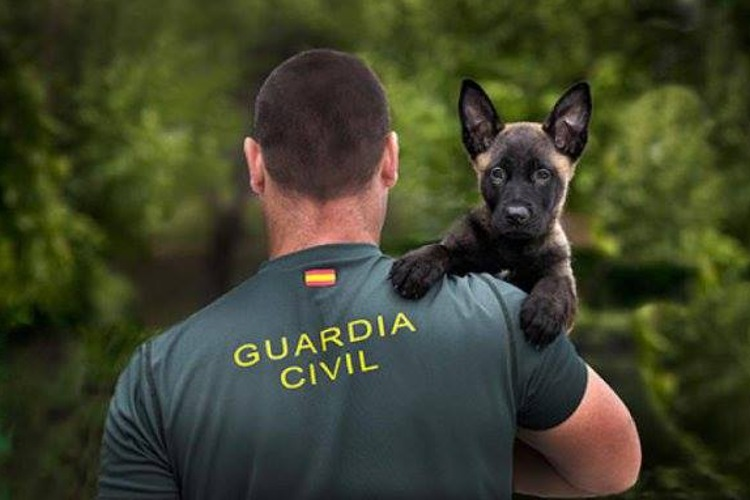 cachorros guardia civil