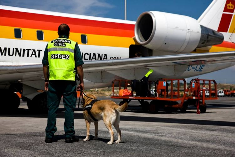 fotos perros guardia civil