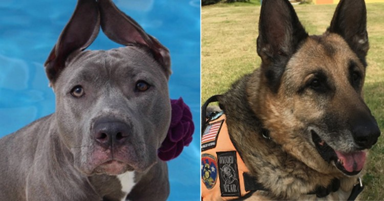 historias perros nominados American Humane Hero Dog Awards 2018