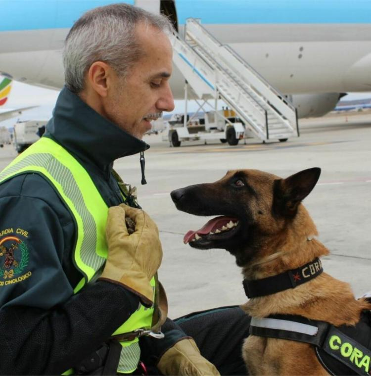 perros guardia civil cora