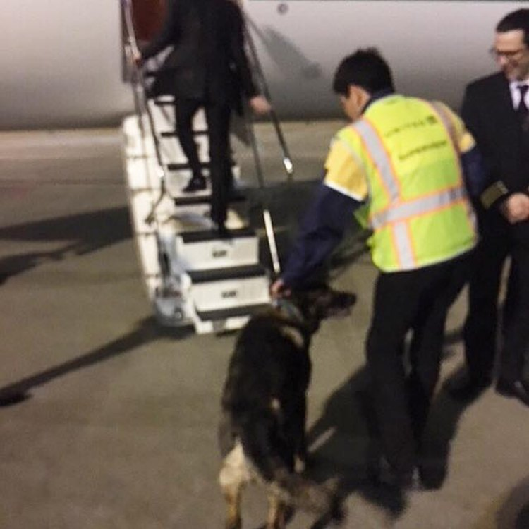 united airlines envia perro a japon