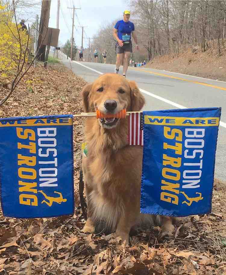 perro de terapia anima corredores maraton boston