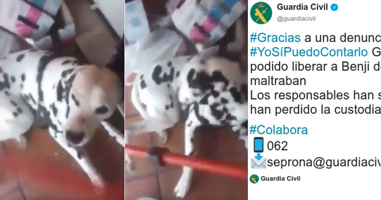 video maltrato dalmata benji guardia civil