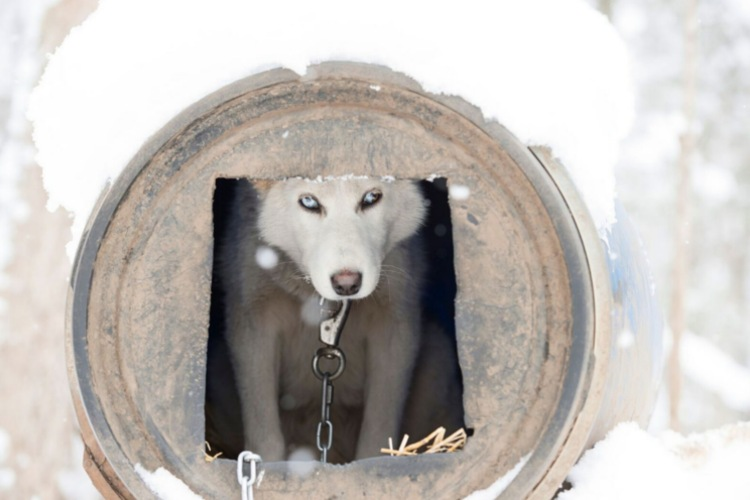 documental perros de trineo sled dogs