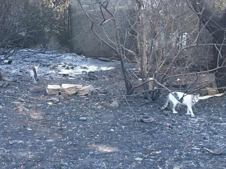 gatos incendio grecia