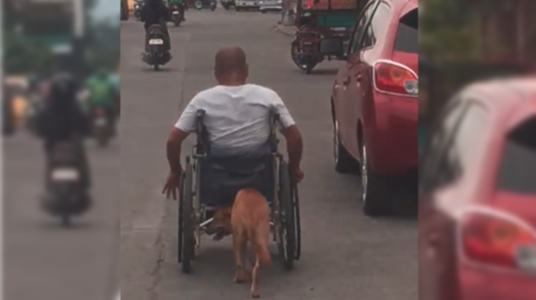 perro empuja silla de ruedas dueno filipinas video