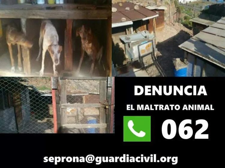 telefono para denunciar maltrato animal guardia civil 062