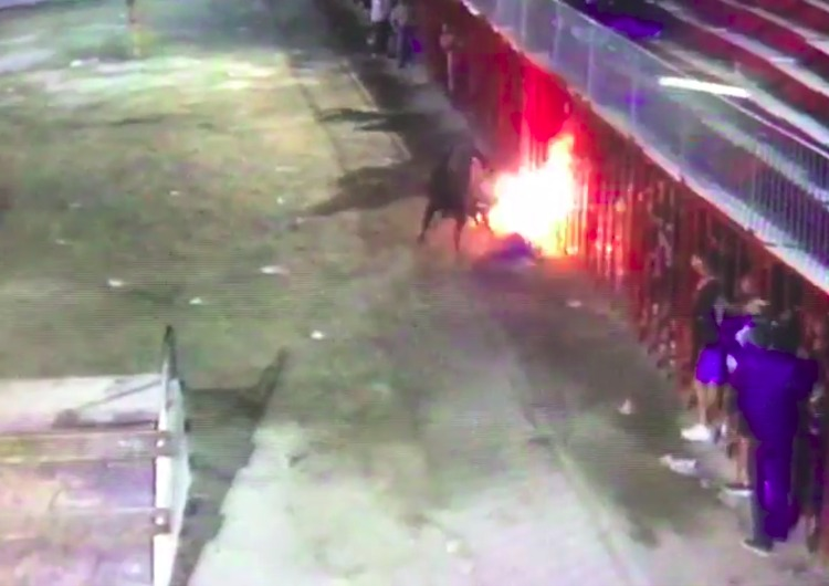 video toro embolado castellon