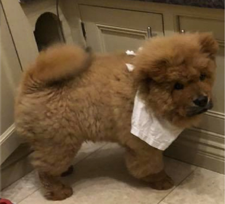perro chow chow muerde policia