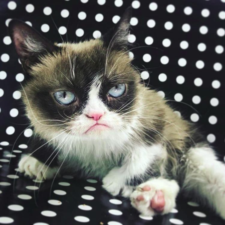 fallece Grumpy Cat